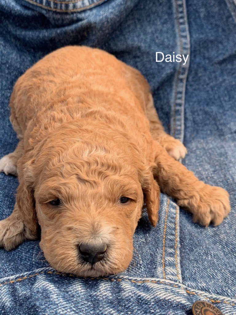 Dominic reserved Daisy