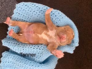 Alexa reserved Tanner