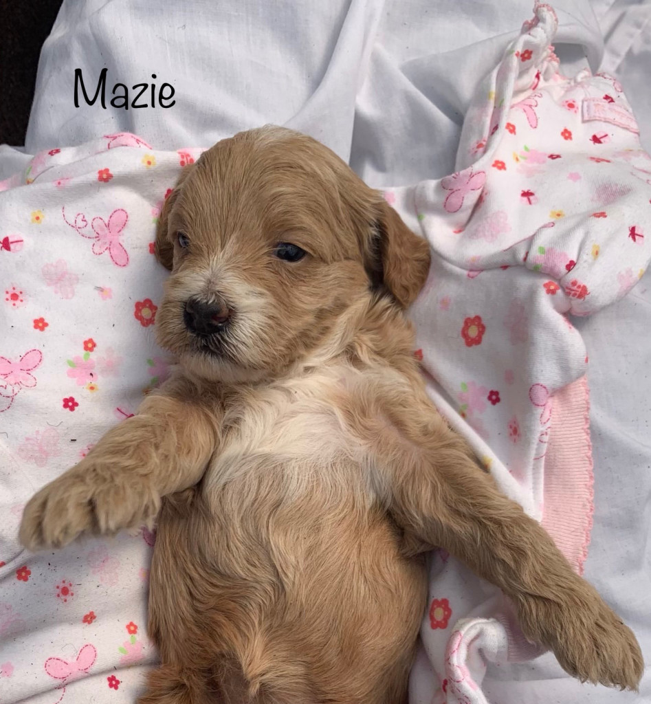 Kelly reserved Mazie