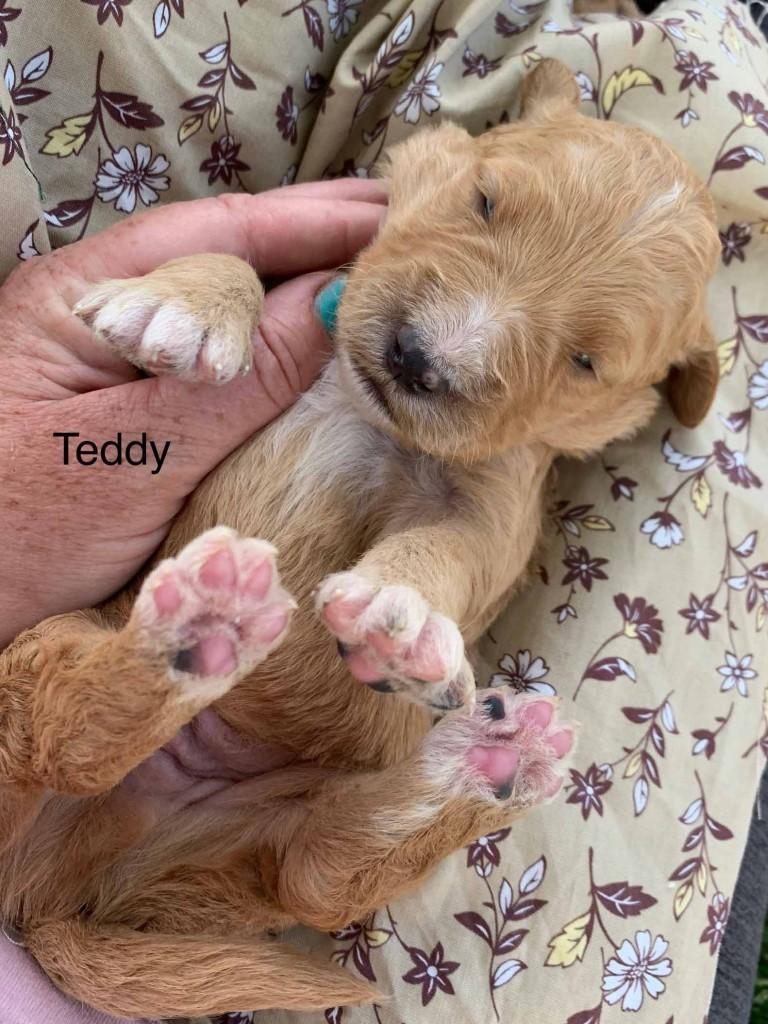 Teddy born late