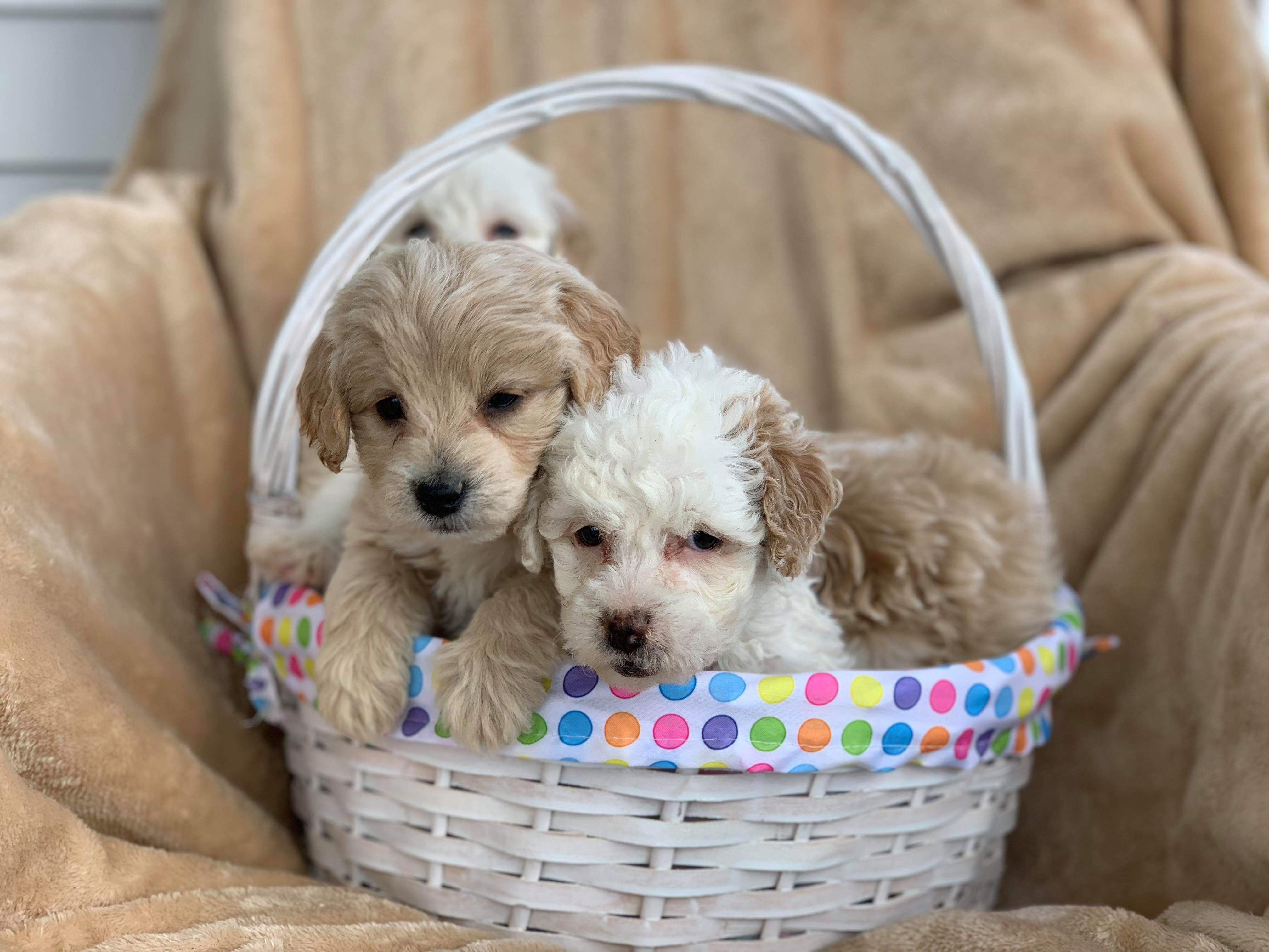 Happily Adopted Archives - Orchard Pups - Orchard Pups